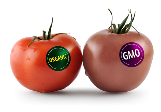 genetically modified organisms assignment last Biodiversity is an important global issue more than just 'i want my children to enjoy it', rich diversity allows medicines and foods to be naturally available a.
